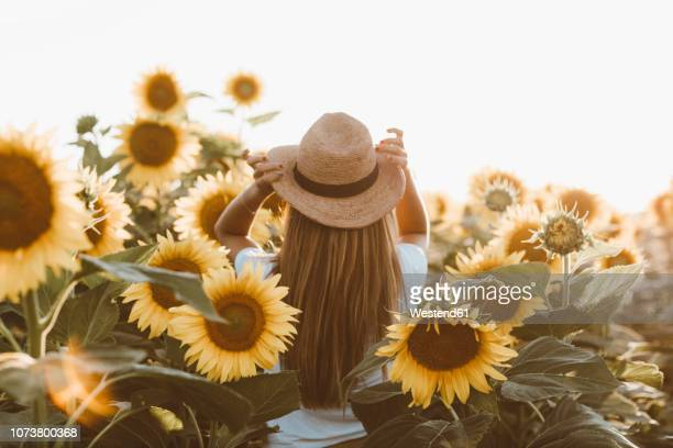 back view of young woman standing in a field of sunflowers - 麦わら帽子 ストックフォトと画像