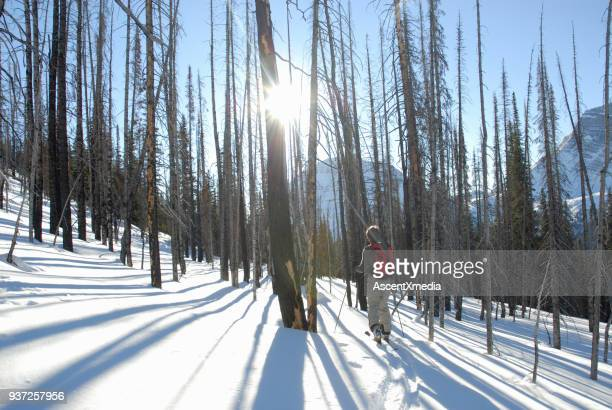 Backcountry skier heads into burned forest and sunlight.
