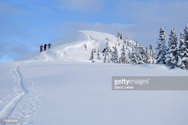 backcountry skiers climbing to summit, rear view - back country skiing stock pictures, royalty-free photos & images