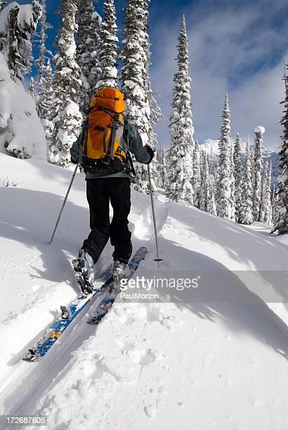 Backcountry Skiing Uptrack
