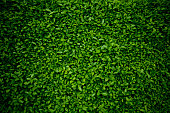 http://www.istockphoto.com/photo/background-comprised-of-small-green-leaves-gm182794428-13339018