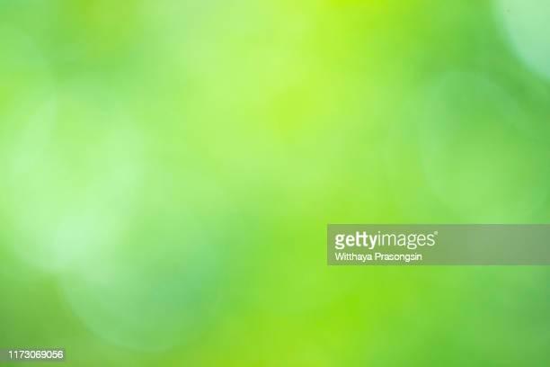 background from nature forest - bicolore colore foto e immagini stock