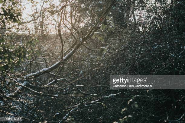 background image of a densley overgrown outdoor area. light covering of snow. - branch stock pictures, royalty-free photos & images