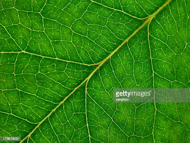 Background Leaf