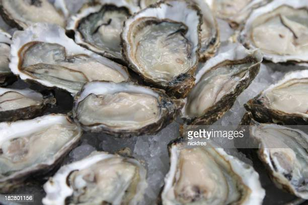 A background of open oyster shells