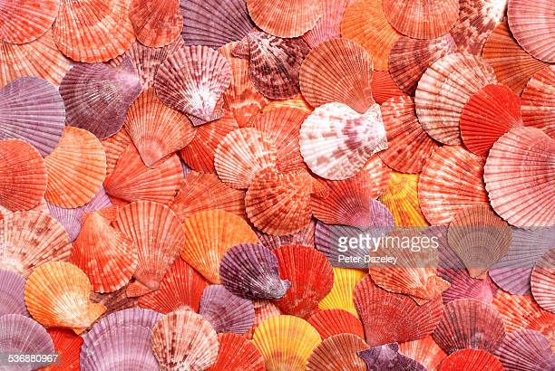 background of seashells - orange colour stock pictures, royalty-free photos & images