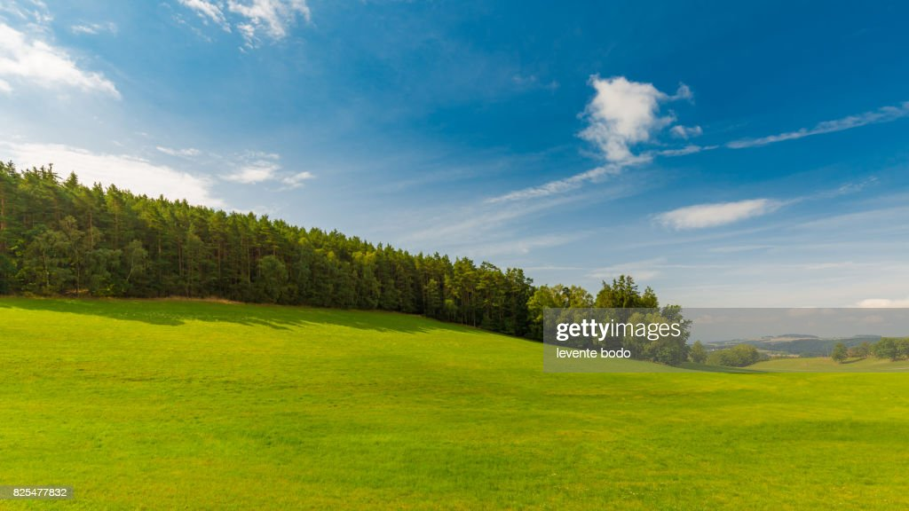 Background photography of bright lush grass field and blue sunny sky. Outdoor countryside meadow nature. Rural pasture landscape with plain green grass. : Stock Photo