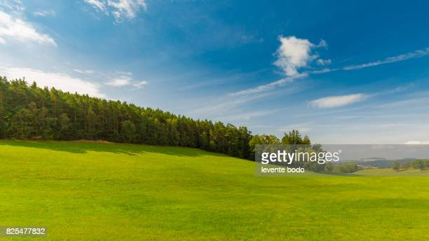 Background photography of bright lush grass field and blue sunny sky. Outdoor countryside meadow nature. Rural pasture landscape with plain green grass.