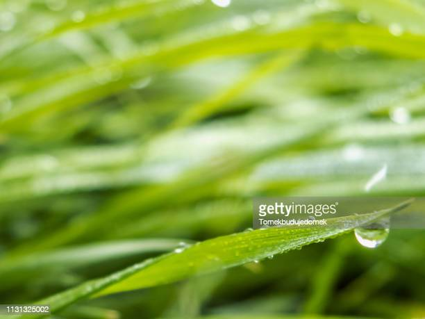 background - regentropfen stock pictures, royalty-free photos & images