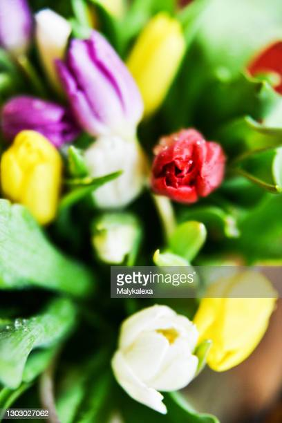 background preparation for greetings colorful tulips