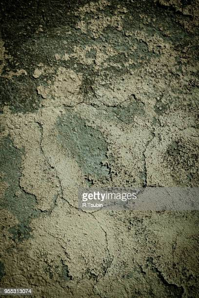 background texture and pattern of a damp grunge wall with mold - sandstone wall stock pictures, royalty-free photos & images