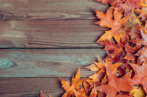 Background texture with old wooden table and yellow autumnal fallen maple leaves Top view Flat lay copy space Place for text Hello autumn, september, october, november, nature concept Rustic style 1264434058