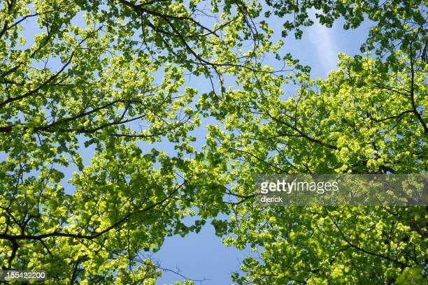 Fond Nature feuilles d'arbres ciel
