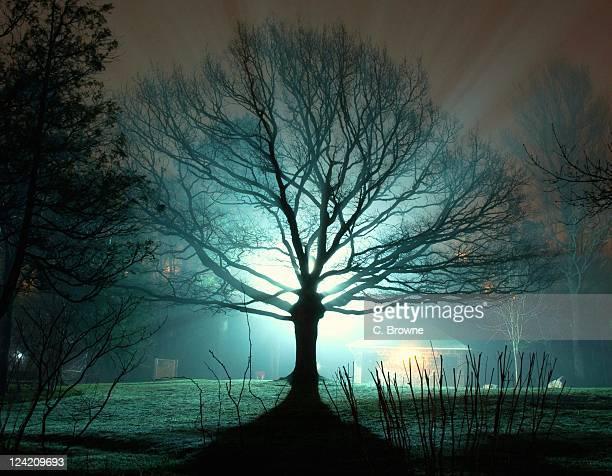 backilt tree without leaves - paisajes de st johns fotografías e imágenes de stock