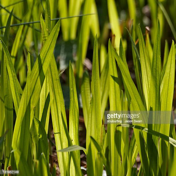 backlit grass - s0ulsurfing stock pictures, royalty-free photos & images