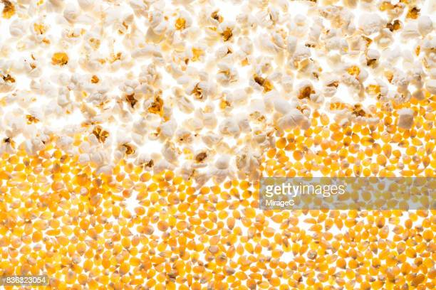 Back-lit Illuminated Popcorn and Corn Grains