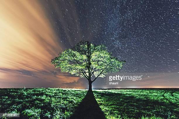 Backlit in the Stars