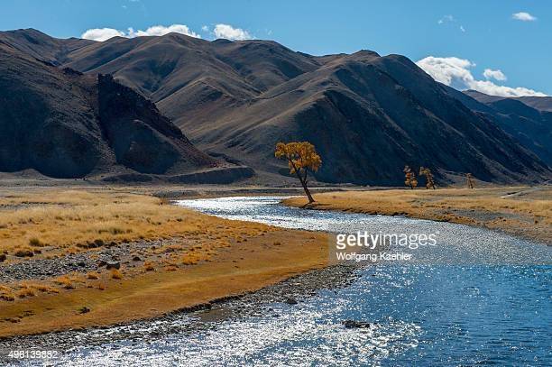 Backlit landscape with larch trees in the fall along the Sagsai River in the Sagsai Valley in the Altai Mountains near the city of Ulgii in the...
