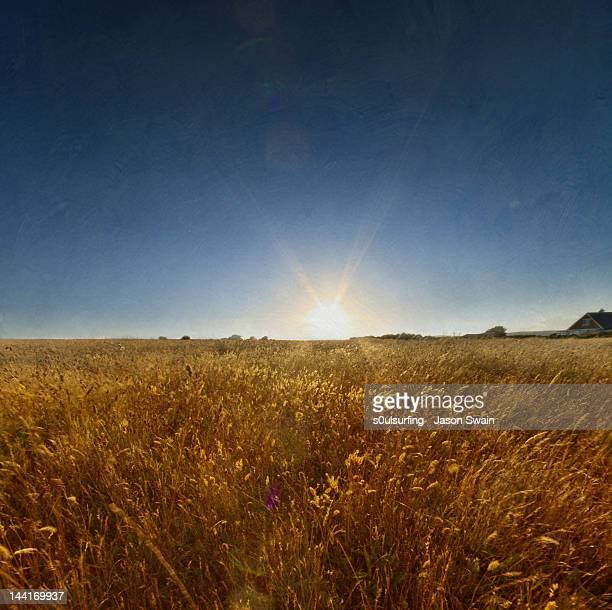 backlit of grass glowing - s0ulsurfing stock pictures, royalty-free photos & images
