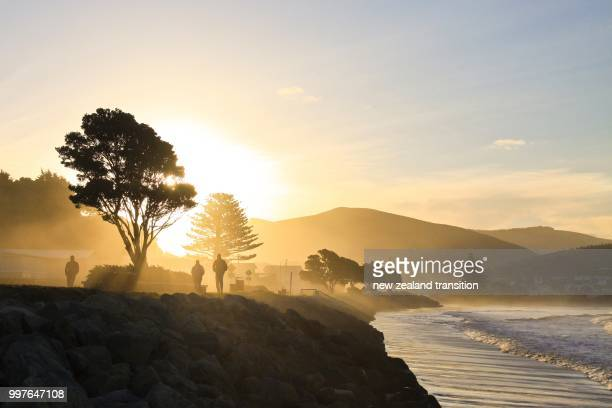 backlit people walking in golden sunlight with sea mist and sun flare, castlepoint, wairarapa - back lit stock pictures, royalty-free photos & images