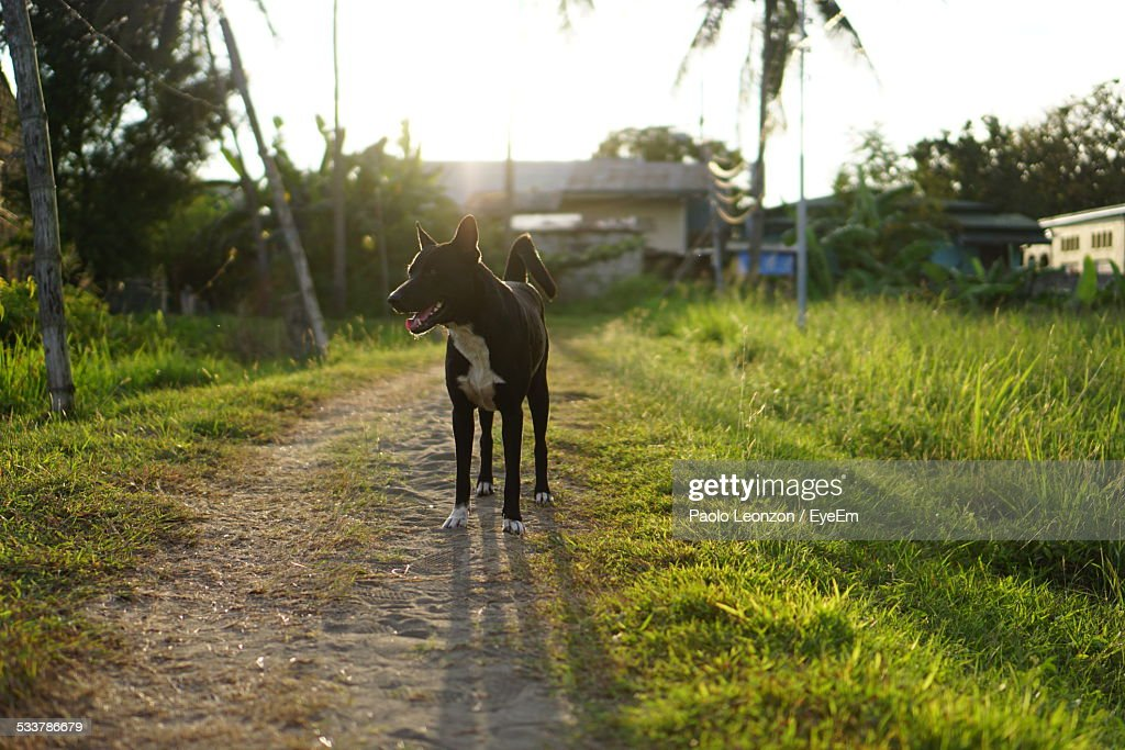 Backlit Photo Of Dog Standing On Path : Foto stock