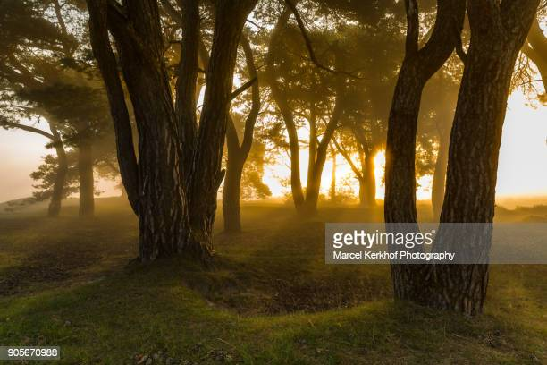 backlit trees in the forest at sunrise - gras stock pictures, royalty-free photos & images