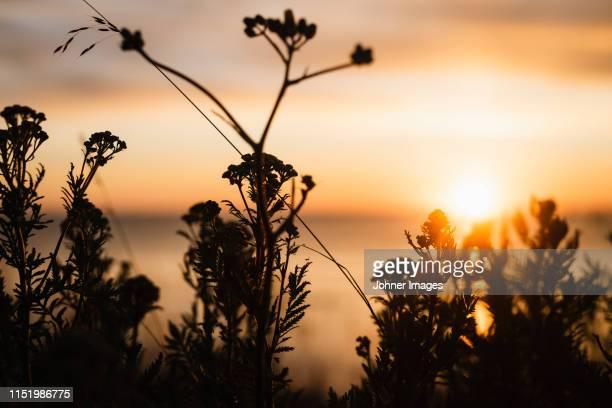 backlit wildflowers - schemering stockfoto's en -beelden