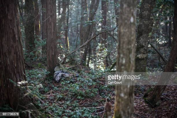 A backpack remains at the scene of an apparent suicide in Aokigahara forest on March 13 2018 in Fujikawaguchiko Japan Aokigahara forest lies on the...