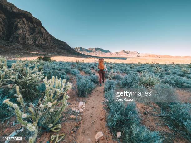 backpacker hiking across the red rocks state park desert - las vegas stock-fotos und bilder