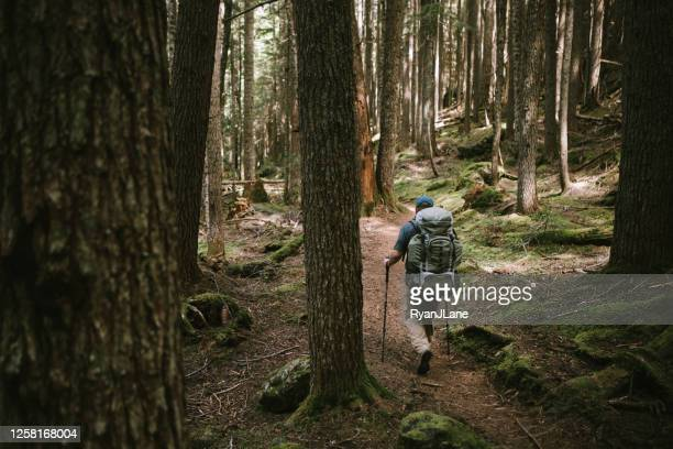 backpacker hiking thick forest on olympic peninsula - wilderness area stock pictures, royalty-free photos & images