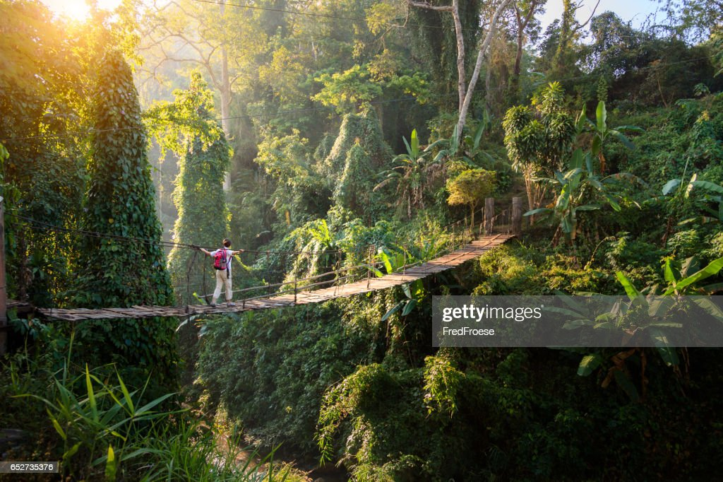 Backpacker en puente en la selva : Foto de stock