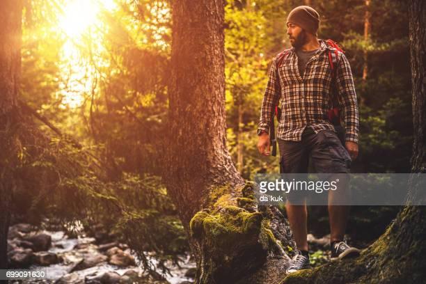 バックパッカー トレイルを夕暮れ森で一人でハイキング