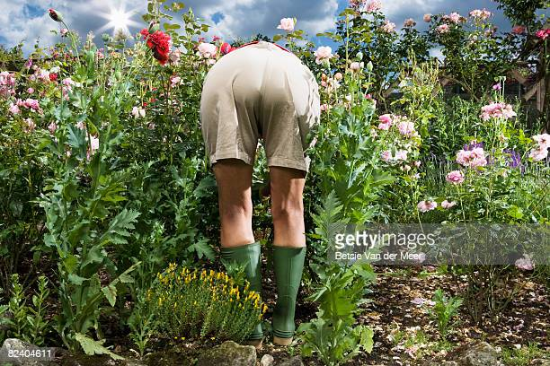 Backview of mature woman gardening