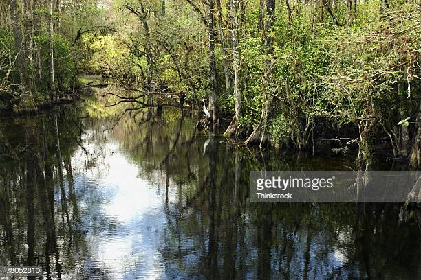 Backwater bayou in Everglades National Park