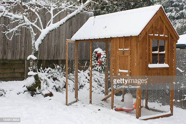 Backyard chicken coop in the snow