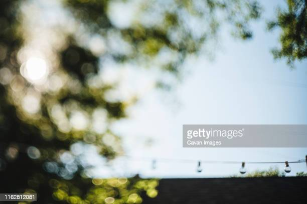 backyard green leaf bokeh with string lights and blue sky - defocussed stock pictures, royalty-free photos & images
