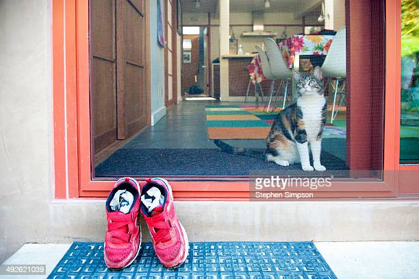 backyard screen door with cat and shoes