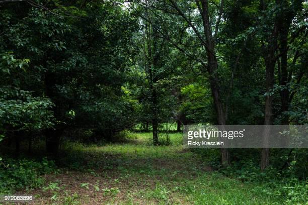 backyard woods - woodbridge virginia stock pictures, royalty-free photos & images