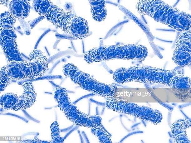 Bactéries qui coule