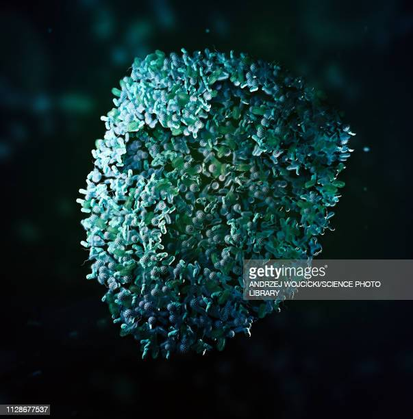 bacteria shield with cross, illustration - shield stock pictures, royalty-free photos & images
