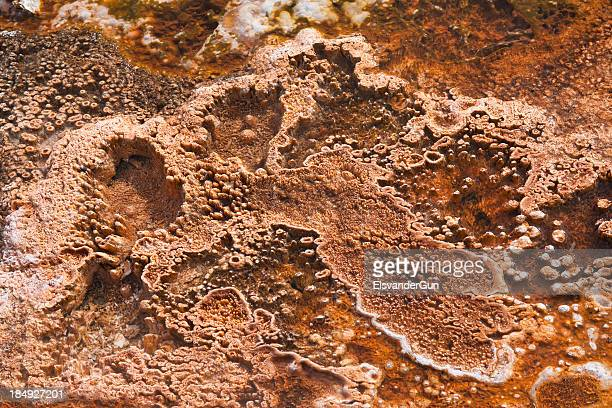 bacterial mat close-up - biofilm organism stock photos and pictures