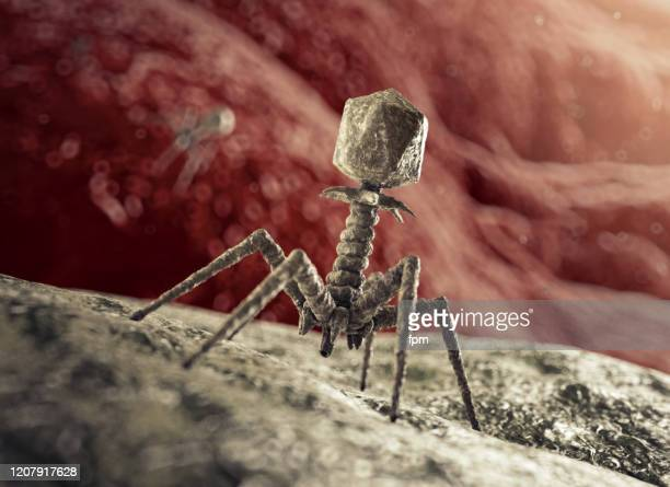 bacteriophage virus attacking bacterium - intestinal tract infection stock pictures, royalty-free photos & images