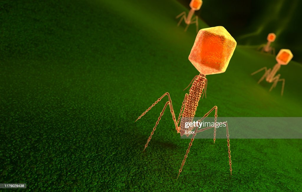 Bacteriophage virus particle on bacteria surface : Stock Photo