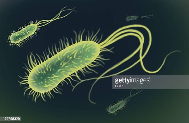 Bacterium Drawing
