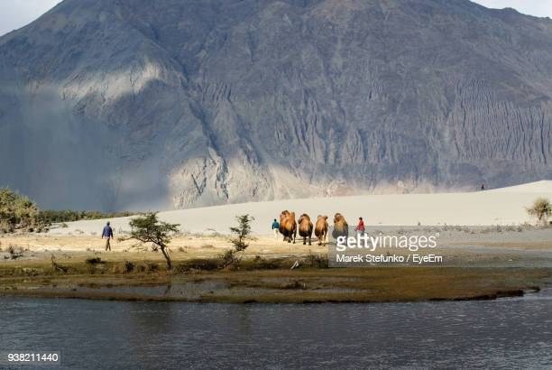 bactrian camels walking at desert by lake - marek stefunko imagens e fotografias de stock
