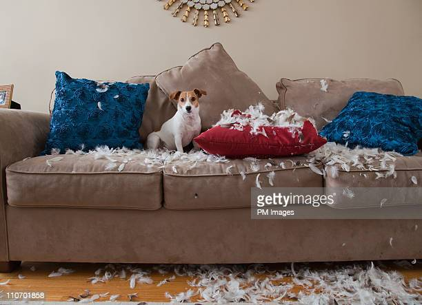 bad dog - vernieling stockfoto's en -beelden