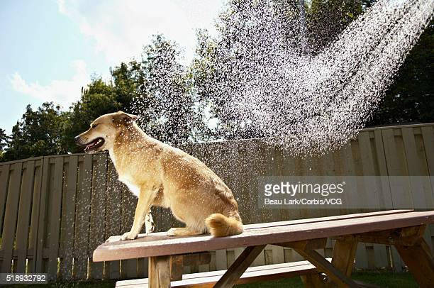 Bad dog sitting on a picnic table