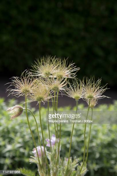 bad hair day - wayne gerard trotman stock pictures, royalty-free photos & images