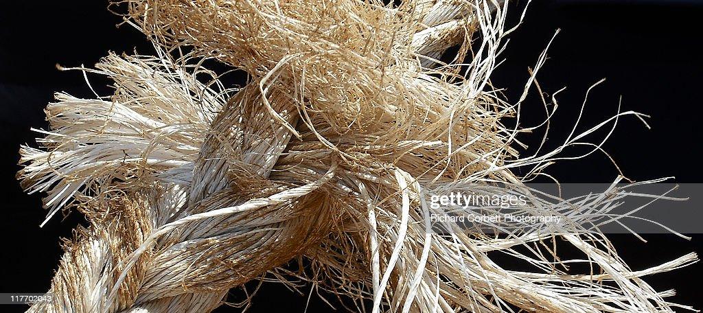 Bad hair day : Stock Photo