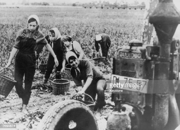 Bad harvests in East Germany have forced the girls from the famous Palucca dancing school in Dresden into helping with the harvesting at a state...
